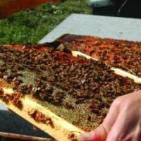 In Toscana è emergenza miele: