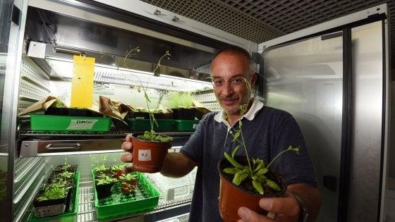 """Firenze, lo studio: """"Le piante ci vedono, hanno 'sensori' sulle foglie"""""""