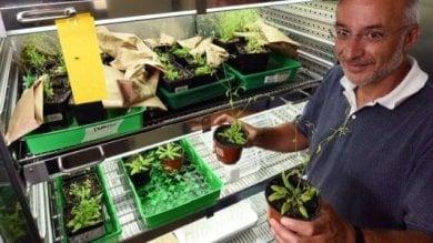 """Firenze, lo studio: """"Le piante ci vedono,  hanno 'sensori' sulle foglie"""" -   foto"""