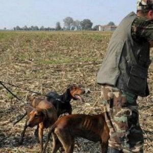 Valdicecina, cacciatore uccide una lepre e aggredisce la proprietaria del terreno che non gliela vuole consegnare