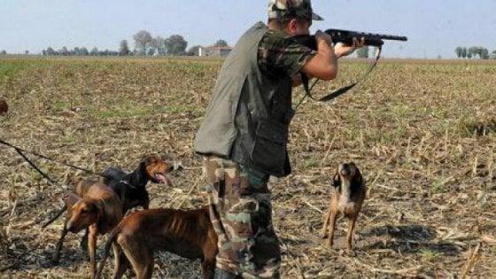 Valdicecina, cacciatore uccide una lepre e aggredisce a proprietaria del terreno che non gliela vuole consegnare