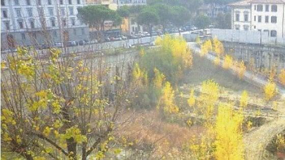 """Firenze, nel cantiere Belfiore è nato un bosco. Gli abitanti si mobilitano: """"Salviamolo"""""""