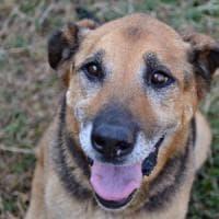 Pistoia, condannati per le torture inflitte al loro cane