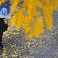 Toscana, bomba d'acqua: allagamenti e alberi caduti
