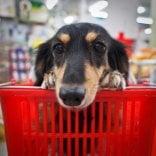"""Il referenDog dei Gigli """"I cani possono entrare al centro commerciale?"""""""