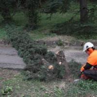 Firenze, due milioni di euro per parchi e giardini: 200 alberi da sostituire