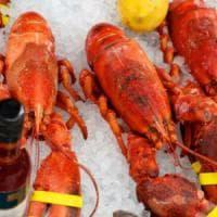 Aragoste vive e con le chele legate: la Cassazione conferma condanna per un ristoratore