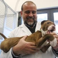 Stella, Rambo ma anche Maradona: così in Toscana si sceglie il nome per il cane di...