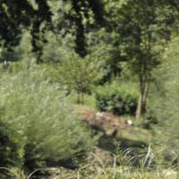 Bracconiere di istrici sorpreso nel Grossetano