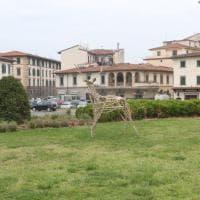 Firenze, spunta un cervo in mezzo all'aiuola
