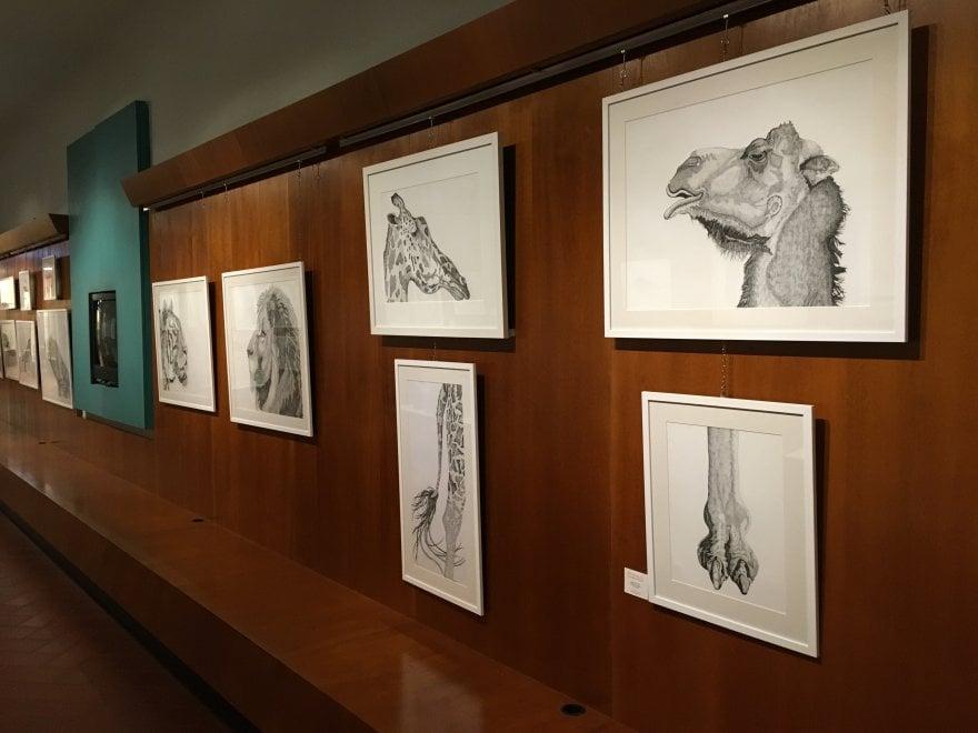 """""""Biophilia"""", gli animali di carta di Arianna Fioratti Loreto in mostra alla Specola"""