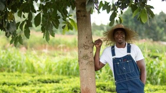 Piantare un cedro a Haiti così il marketing green diventa un videogioco