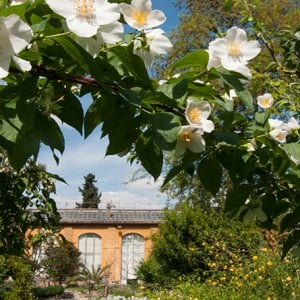 Firenze, a lezione di Qi Gong nell'Orto Botanico