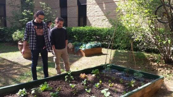 Università, al polo di Sesto Fiorentino la svolta verde: l'orto fai da te degli studenti