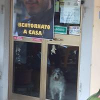 Anche il cane Zara aspetta il ritorno di Gabriele