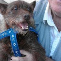 Grosseto, l'abbraccio tra Andrea e il suo cane ritrovato