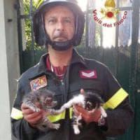 Pisa, gattini abbandonati su un cipresso dalla mamma: salvati