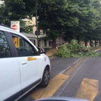 Firenze, un grosso ramo cade in strada in via Benedetto Marcello