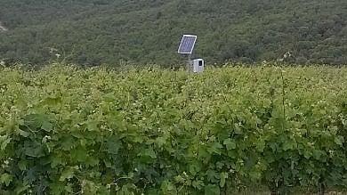 """Toscana: ultrasuoni nelle vigne contro i cinghiali: """"Il sistema funziona"""""""