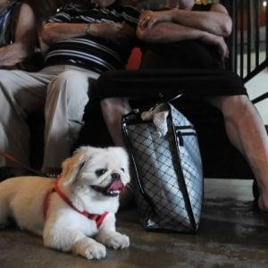 Il passaporto per gli animali domestici, dove richiederlo in Toscana