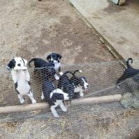 Montopoli, il proprietario si trasferisce in Inghilterra e abbandona il suo cane con 12 cuccioli