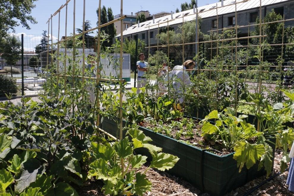 Pomodori, melanzane e zucchine: all'Università di Firenze arrivano gli orti degli studenti