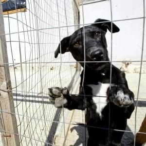 Firenze, il Comune rilancia la pensione per i cani a Ugnano