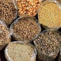Agricoltura, da funghi e batteri i biofertilizzanti per cereali