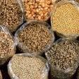 Lo studio: da funghi e batteri i biofertilizzanti per cereali