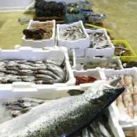Pesce illegale sequestrato in Toscana
