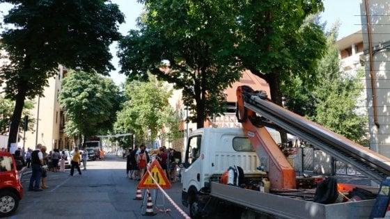 """La battaglia degli alberi a Firenze,  in viale Corsica taglio rinviato: """"Prima vittoria"""""""