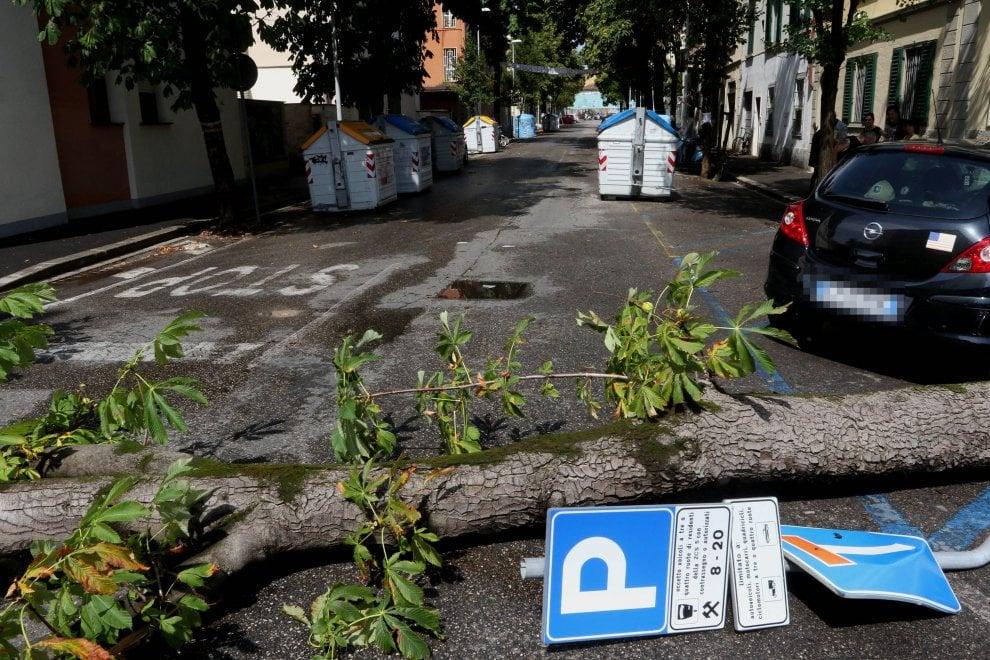 Firenze, il temporale fa cadere un albero in viale Corsica: il taglio rinviato per le proteste dei residenti