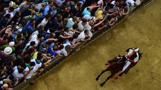 Palio di Siena, assegnati i cavalli: esulta Valdimontone