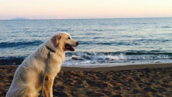 Montalcino, la favola del cane Beethoven: 80 chilometri in tre giorni, pur di tornare dalla sua padrona