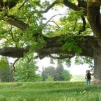Toscana, arriva l'elenco degli alberi monumentali. Ma non c'è la Quercia delle Checche