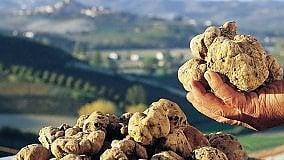 TOSCANA GOURMET    Il tartufo vuole il riconoscimento Unesco   Chalet Fontana, la cucina si rinnova     Archivio  -   I ristoranti   -   I vini   -   I libri
