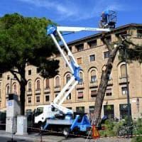 Dopo la rabbia e i pianti, il taglio dei 300 alberi  finisce anche in procura