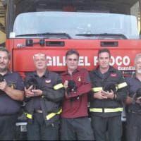 Volterra, cuccioli buttati giù da un ponte e salvati dai vigili del fuoco