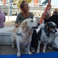 Alla Fiera di Scandicci lo stand a quattro zampe per giocare con i cani, imparare e divertirsi