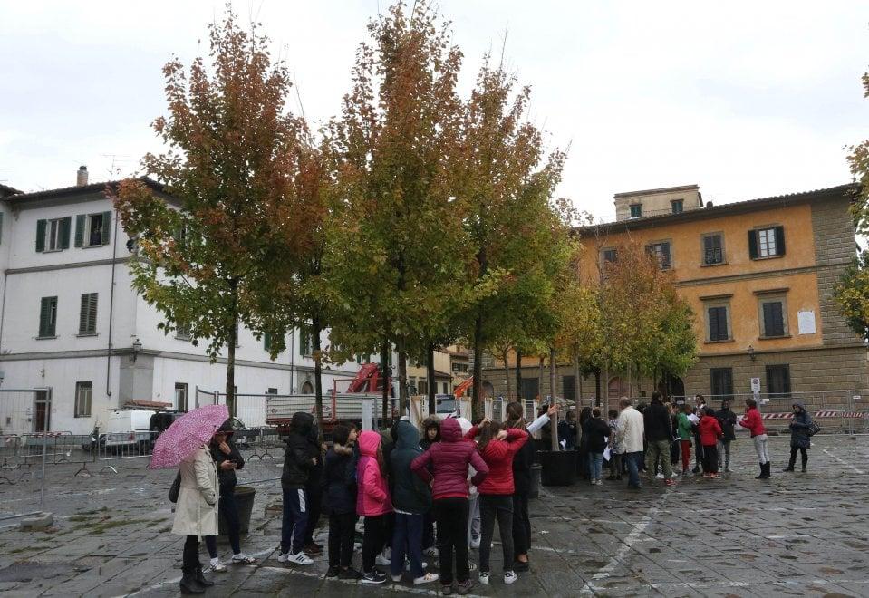 Firenze, ecco gli alberi nella nuova piazza del Carmine