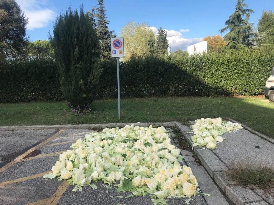 Firenze, occupa posto per disabili per essiccare cavolfiori: multato