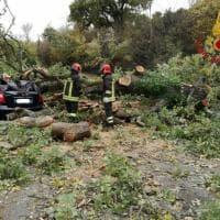 Chianciano, grosso albero schiaccia un'auto: donna salvata dai vigili del fuoco