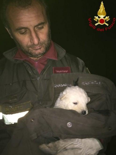 Grosseto, cinque cuccioli in un cassonetto: solo uno si è salvato
