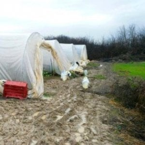 Plastiche bruciate in ortaggi, sequestrata ditta cinese a Campi Bisenzio