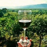 Montalcino, rubate mille bottiglie di Brunello