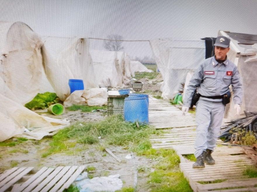 Campi Bisenzio, nuovo blitz nella Chinatown rurale: sequestrate 50 serre