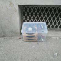 Firenze, contenitore sospetto davanti alla scuola Rossini: l'intervento degli artificieri