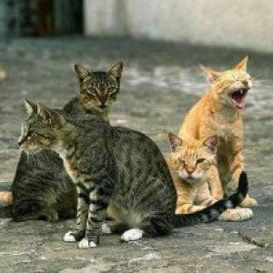 Prato, viveva in casa con 34 gatti