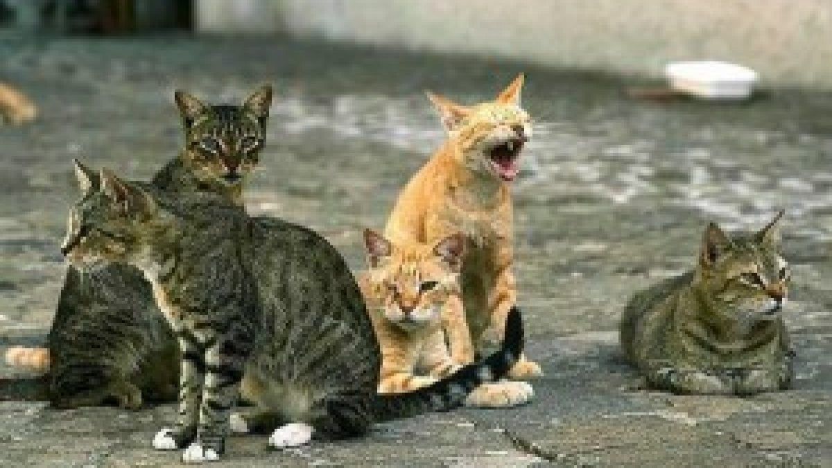 Emergenza sanitaria aiutiamo il gattile di bagno a ripoli bagno