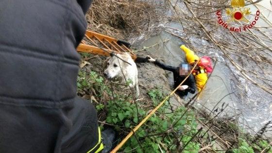 Il cane cade in Arno, la padrona si tuffa e rischia di annegare